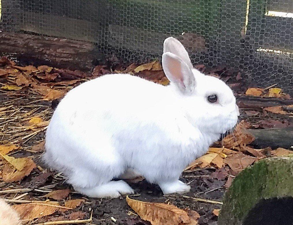 """Annelies: """"Een tam konijn vrijlaten in de natuur is een doodvonnis"""""""
